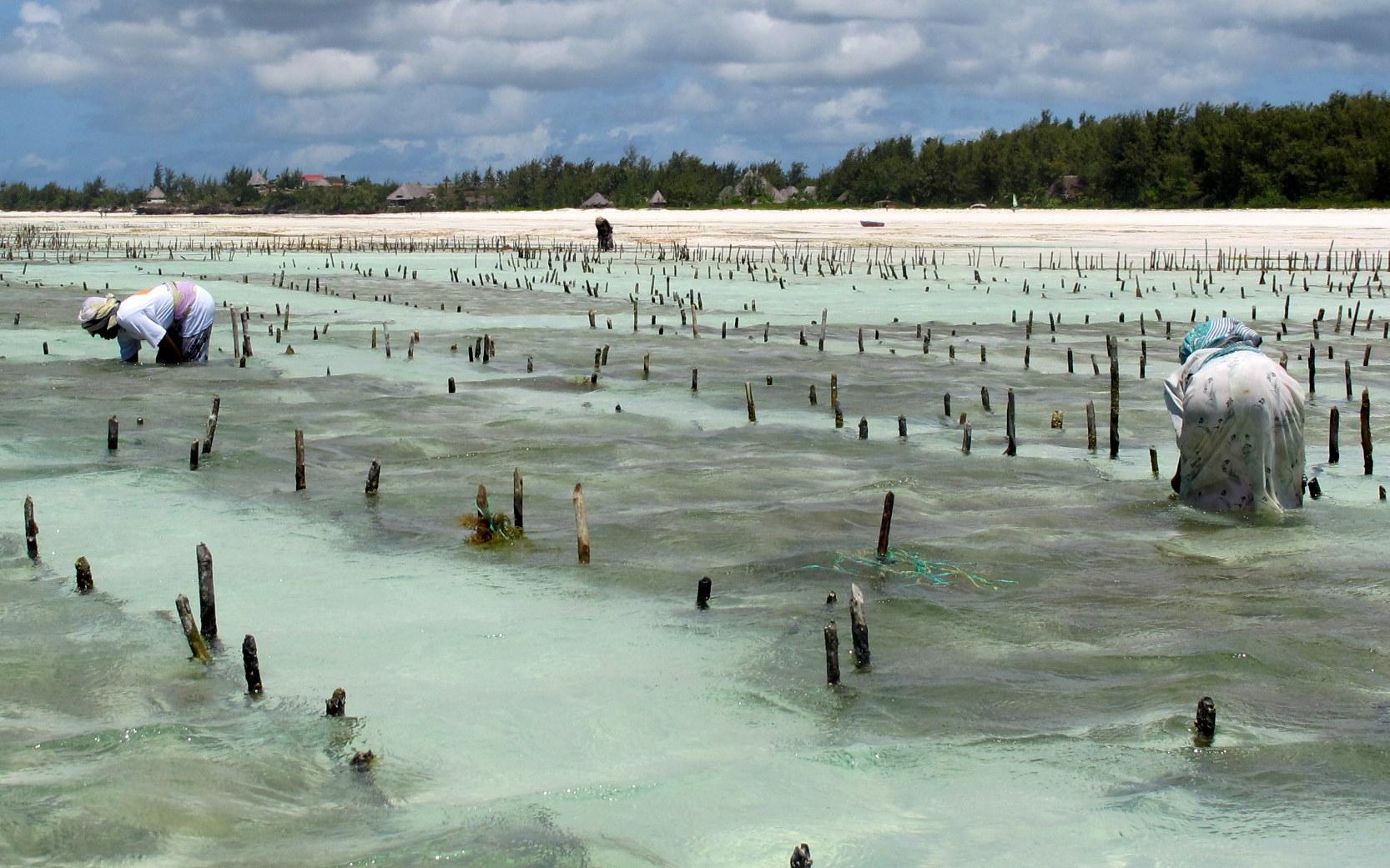 Aeroporto Zanzibar Arrivi : Racconti di viaggio zanzibar elena